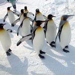 旭山動物園をより楽しむためのお得技