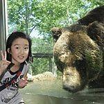 【北海道】サホロリゾートベアマウンテンで野生のヒグマに急接近!
