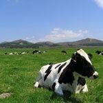 【北海道】渡辺体験牧場で酪農体験を満喫!