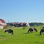 網走原生牧場観光センターは家庭で楽しめる観光牧場