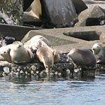 【北海道】抜海港でアザラシを肉眼で!眺めのいい無料展望室あり!